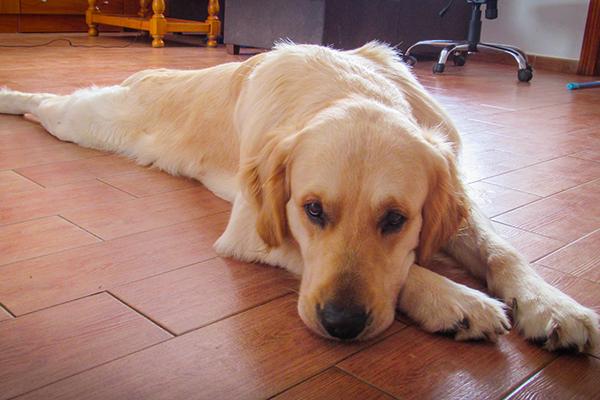 признаки заражения глистами у собак