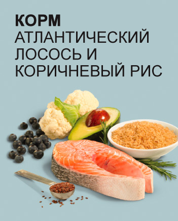 Преимущества Pronature Holistic Cat Atlantic Salmon & Brown Rice